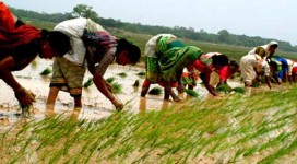 agriculture-jharkhand